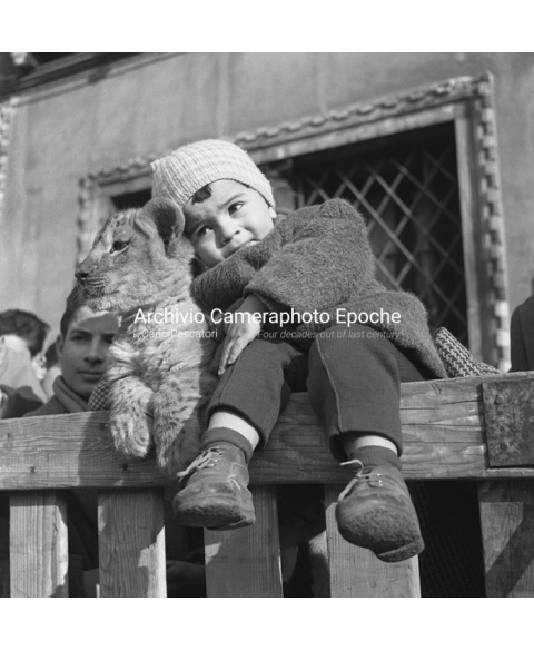 Venice Circus - The Baby And The Lion Cub