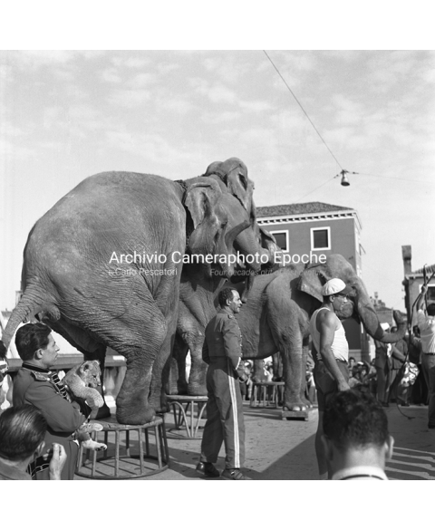 Venice Circus - Elephants Performing In Venice