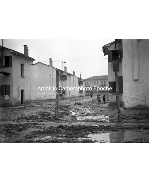 Venice Poverty And Decay - Gooses